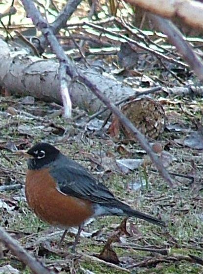 Robins14