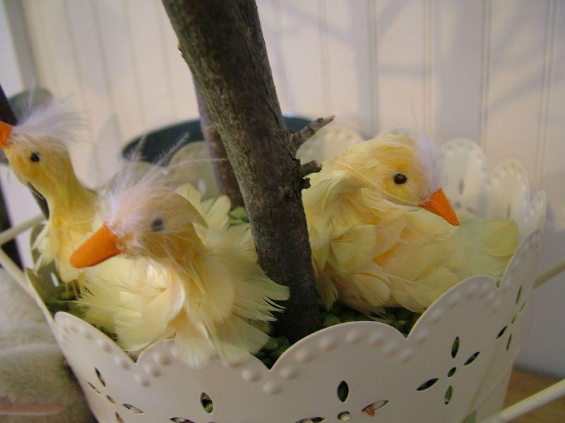Duckie3