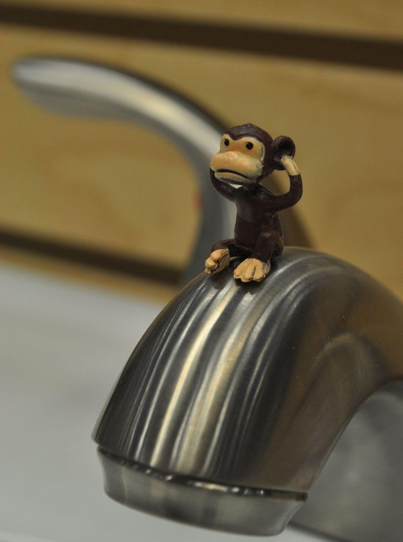 Monkey6d_2_26_11