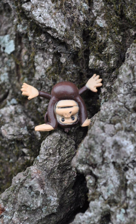 Monkey12_4_22_11