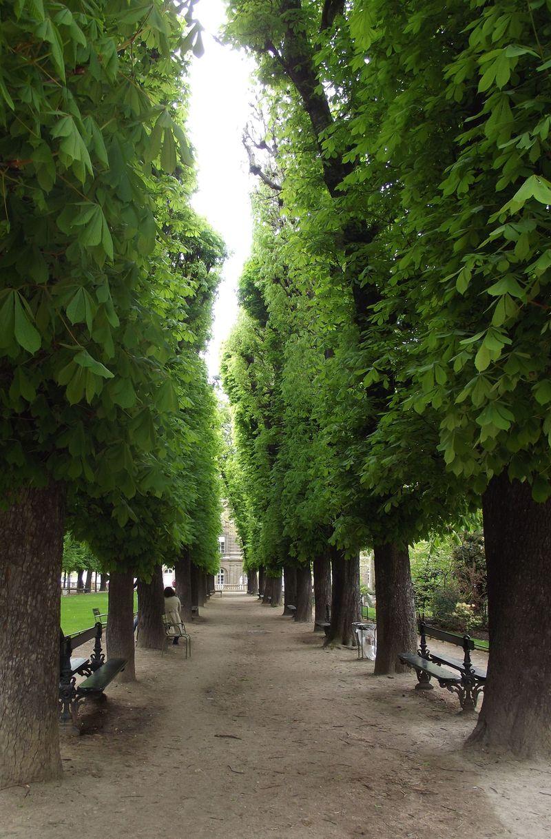 Treewalk2