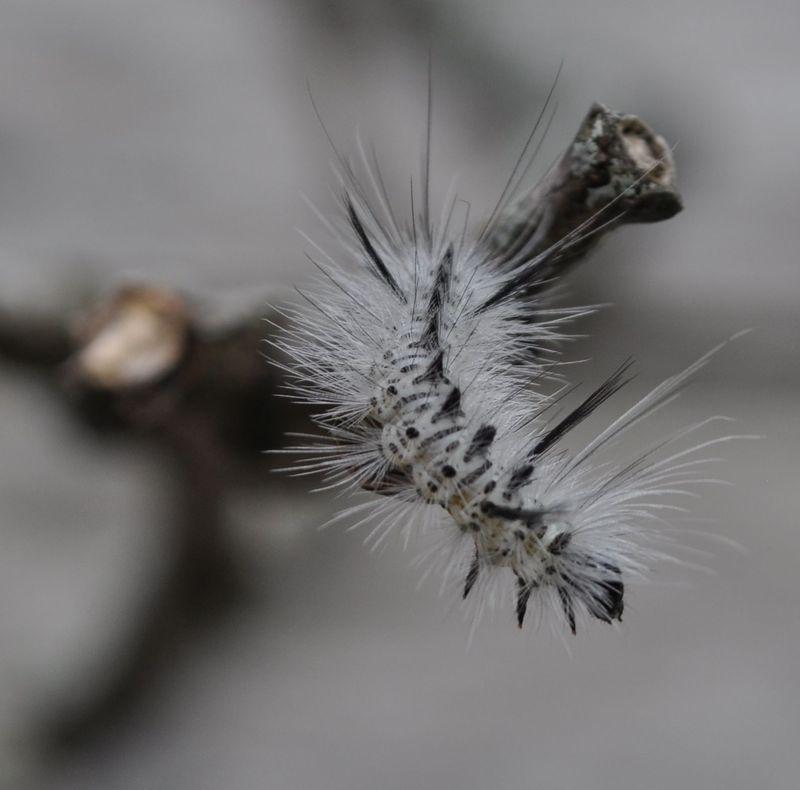 Caterpillar11b