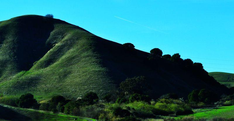 Californiagold2