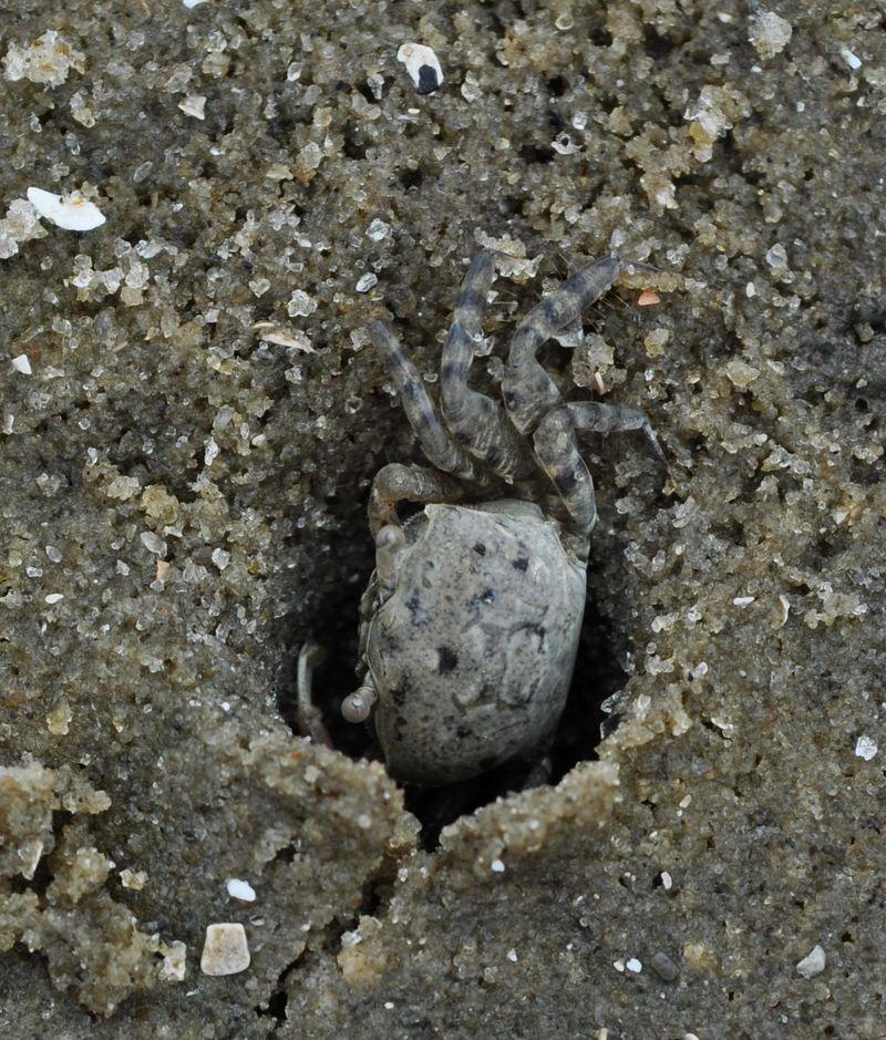 SandCrabs3