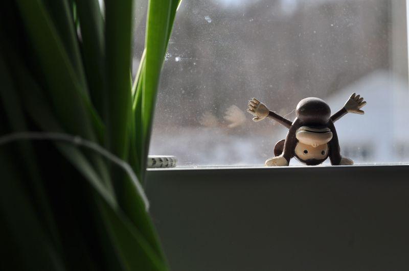 MonkeySeeMonkeyDo2