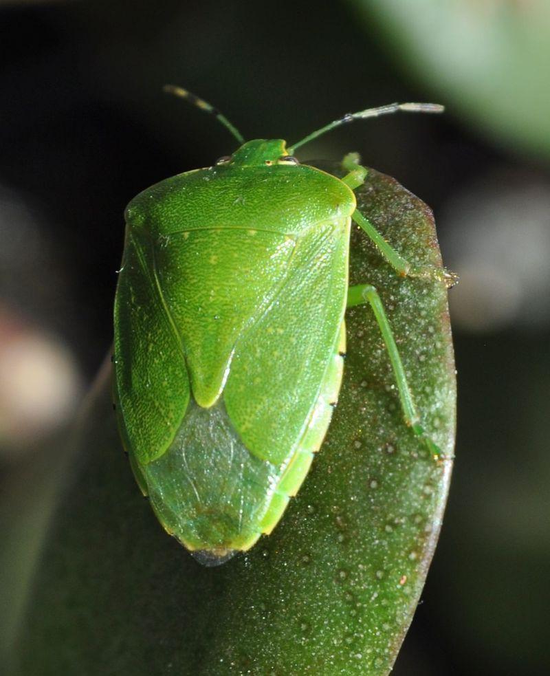 Bug4a
