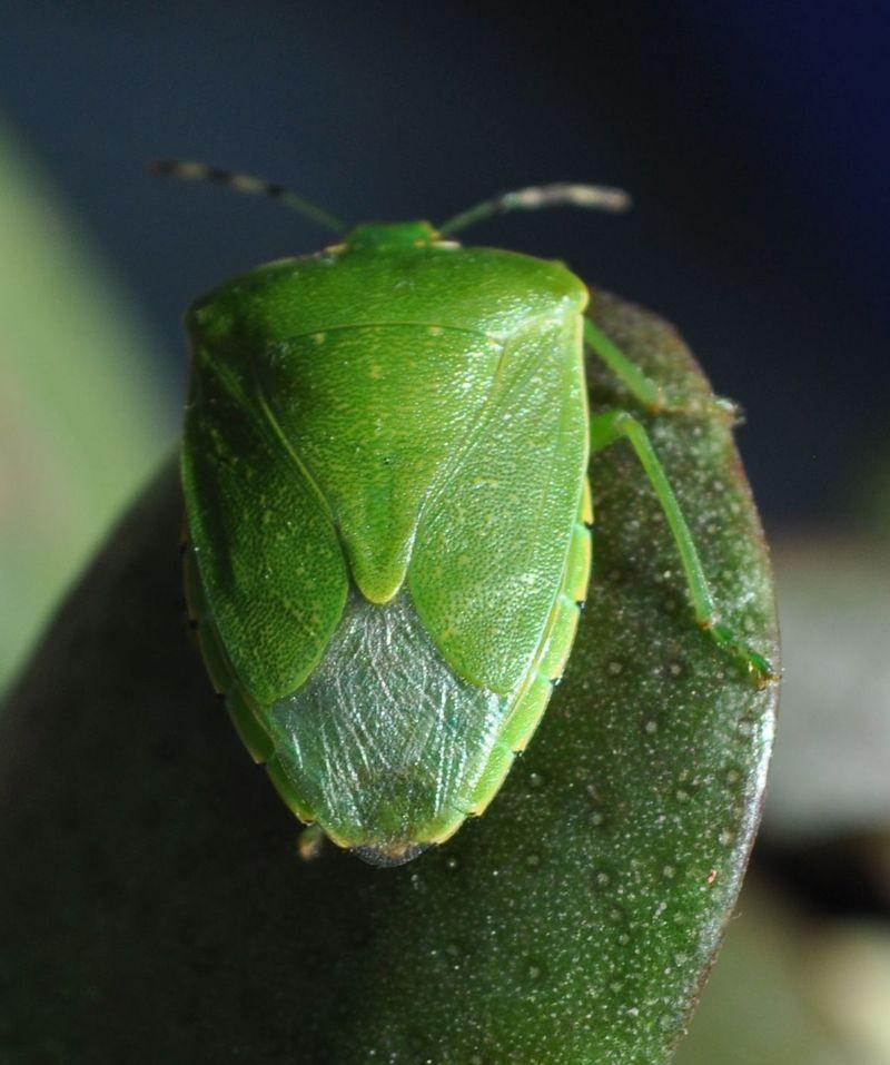 Bug5a