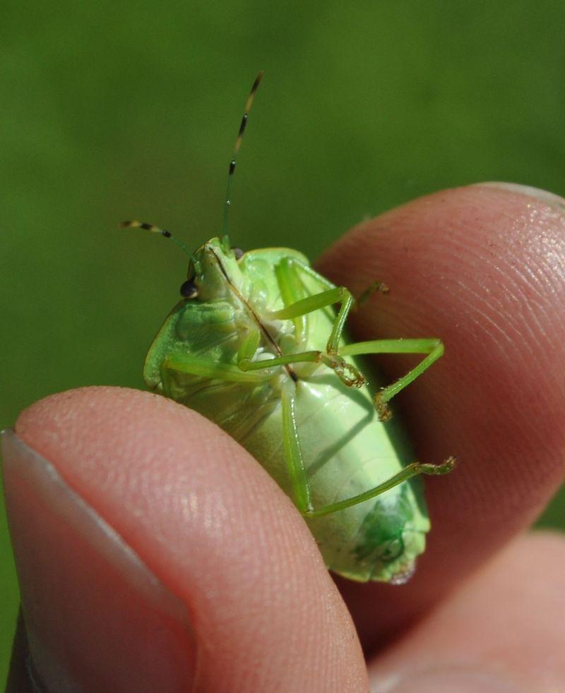 Bug7a