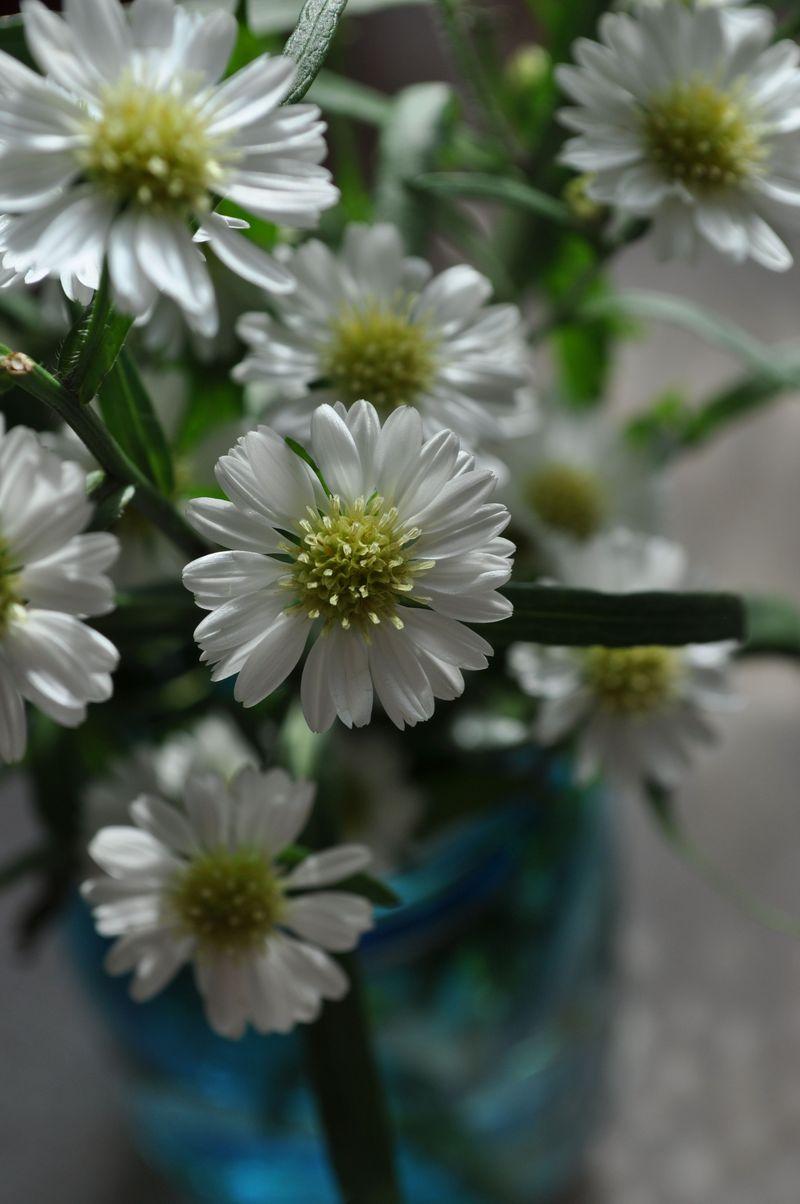 DaisyMums26