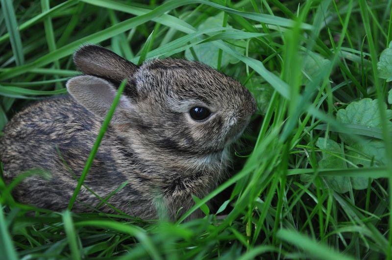 Bunny4c