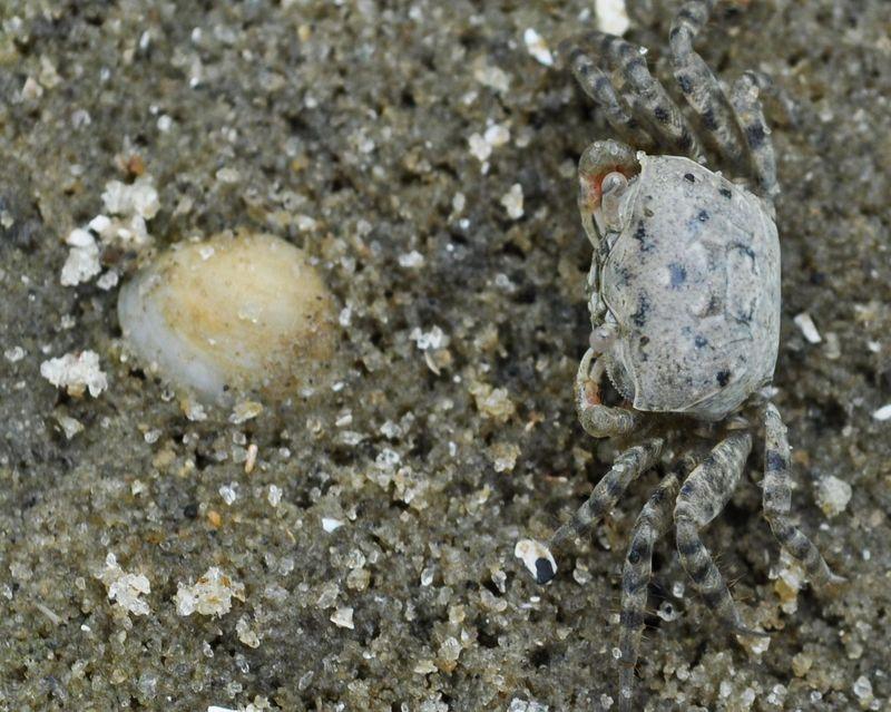 SandCrabs2
