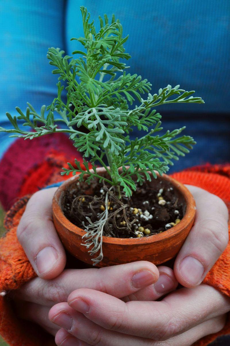 PlantOct19a