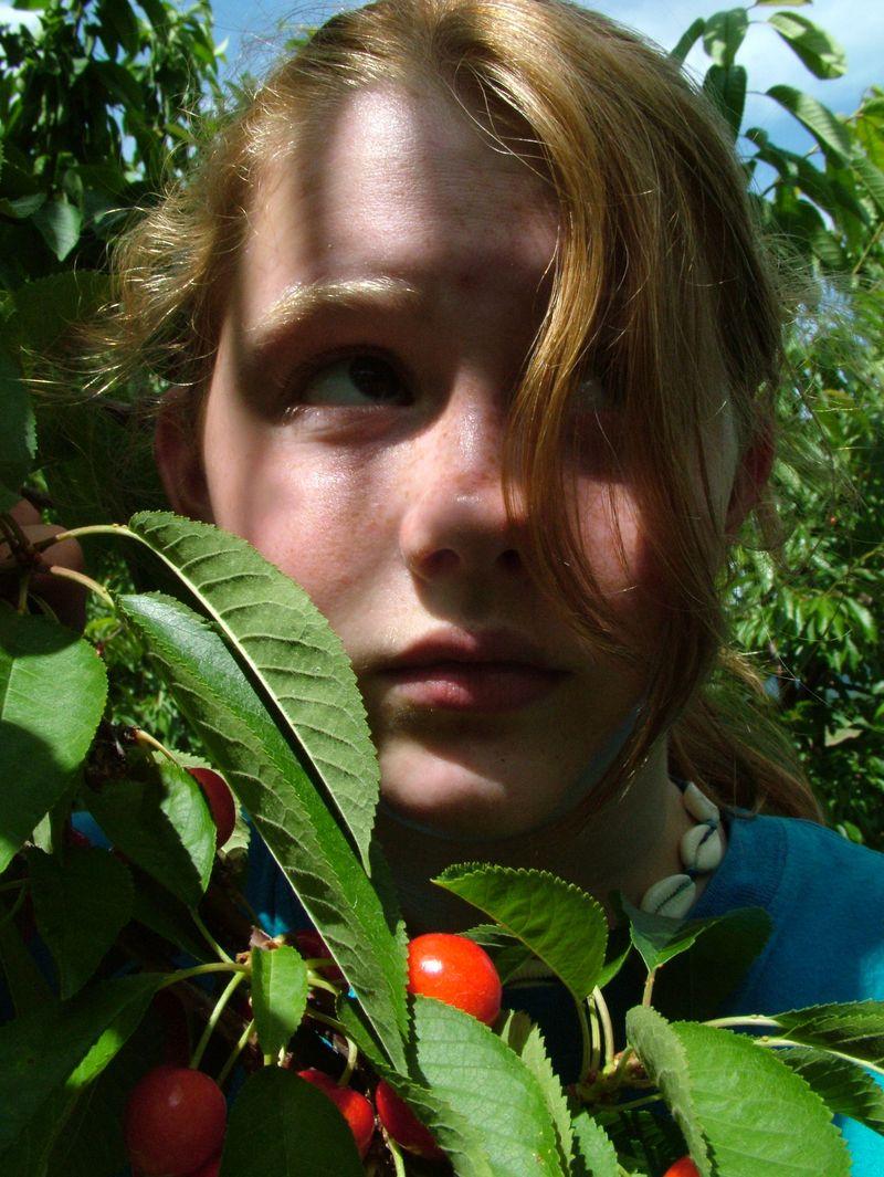 Cherries2010