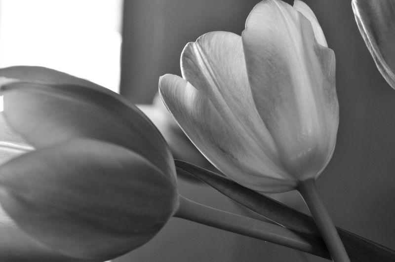 TulipsB&W1