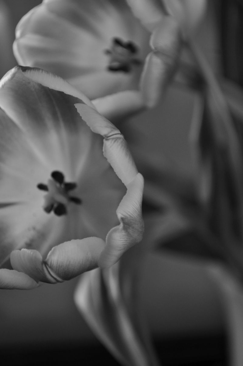 TulipsB&W3