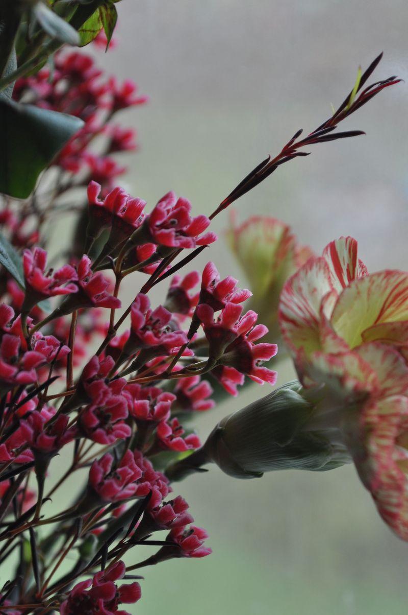 Flowers_0ct25_7